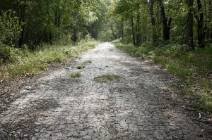 photo shows an overgrown paved road.