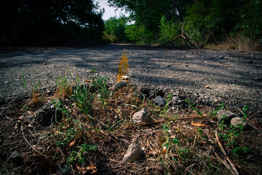 photo shows grass popping up through an abandoned paved road.