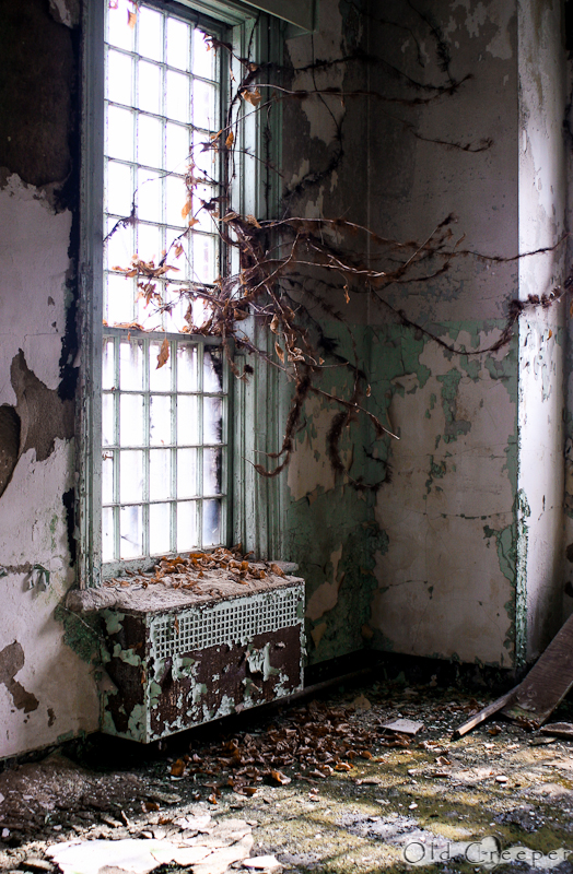 photo shows vines covering a dark window